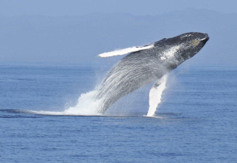 Découverte des baleines