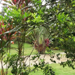 Jardin exotic